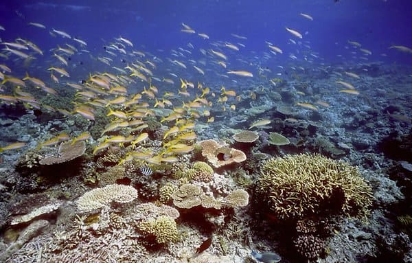 Bleak Picture of Great Barrier Reef's Changing Chemistry